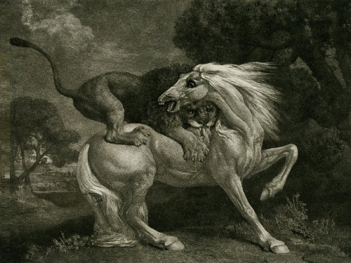 George Stubbs (1724-1806). A lion devouring a Horse. May 1788. Soft-ground etching with roulette work. 275x35.5cm. Nicholas Stogdon