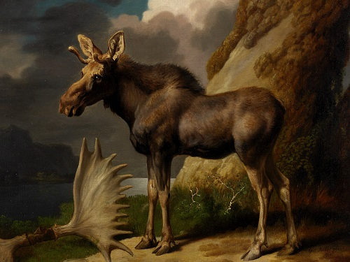 George Stubbs (1724-1806) The Moose. 1770. Oil on canvas, 61x70.5cm. The Hunterian, University of Glasgow.