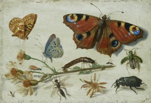 Jan van Kessel the Elder, Three Butterflies, a Beetle and other Insects, with a Cutting of Ragwort, c. 1650, oil on copper, 9 × 13 cm, WA1940.2.42, Ashmolean Museum, University of Oxford
