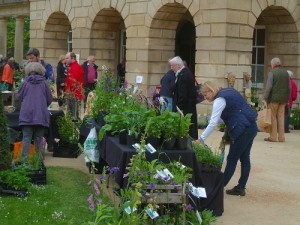 Plant Sale @ The Holburne Museum