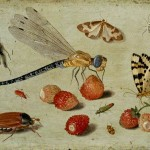 Jan van Kessel the Elder A Cockchafer, Beetle, Woodlice and other insects with a Sprig of Auricula. c.1650. Oil on copper. Ashmolean Museum. University of Oxford.