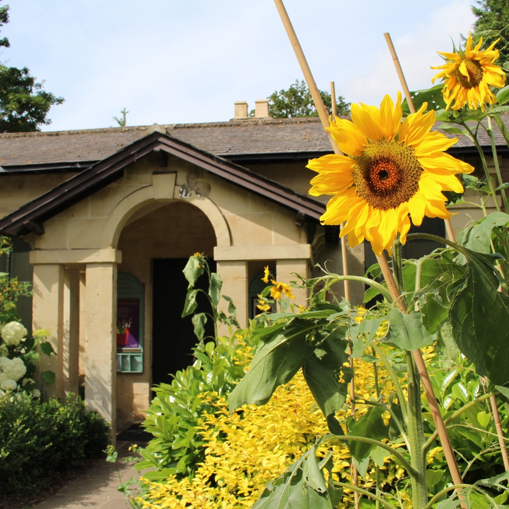 Sunflowers outside the The Gardener's Lodge