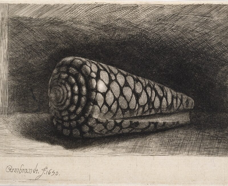 Rembrandt van Rijn, The Shell, 1650. Etching, engraving and drypoint on laid paper © Ashmolean Museum, University of Oxford
