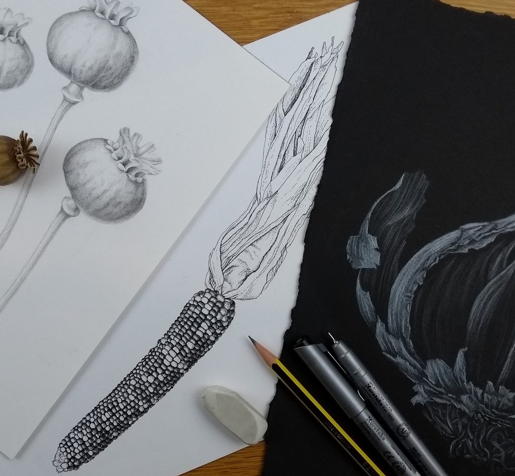 Julia Trickey. Adult Workshop: Botanical Illustration: Drawing Spring with Julia Trickey