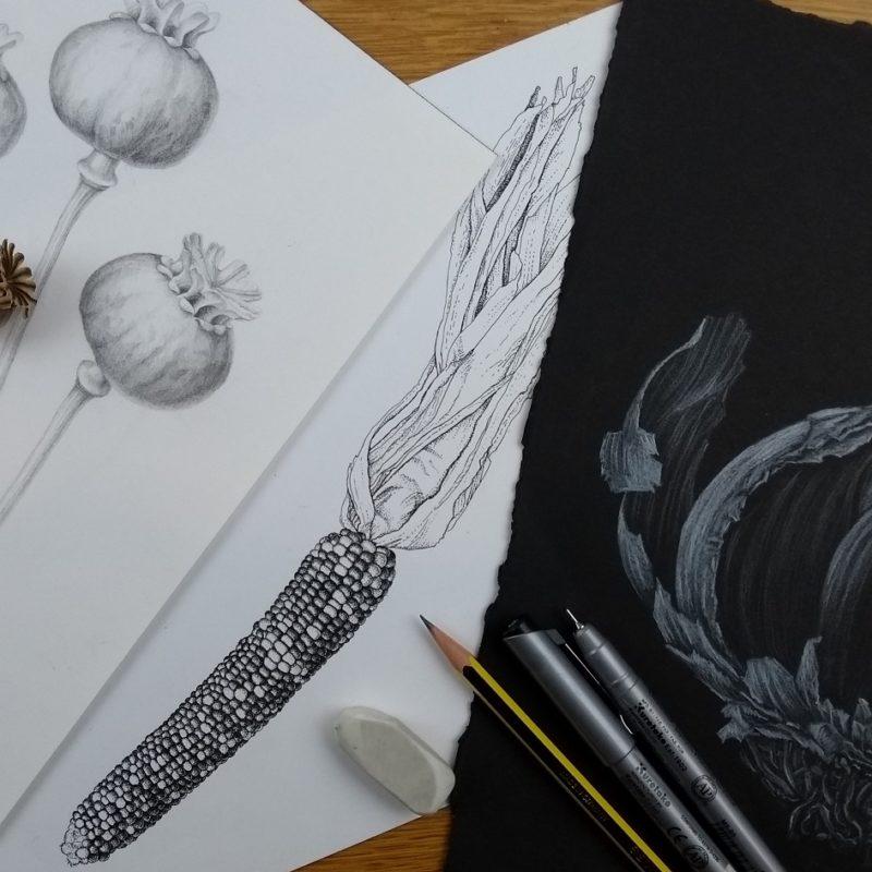 Julia Trickey. Adult Workshop: Botanical Illustration: Drawing Spring with Julia Trickey