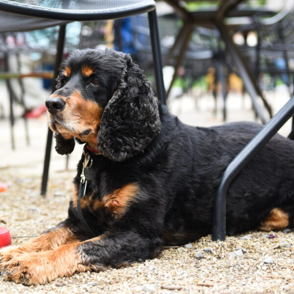 Dogs are welcome at the Garden Cafe Marquee